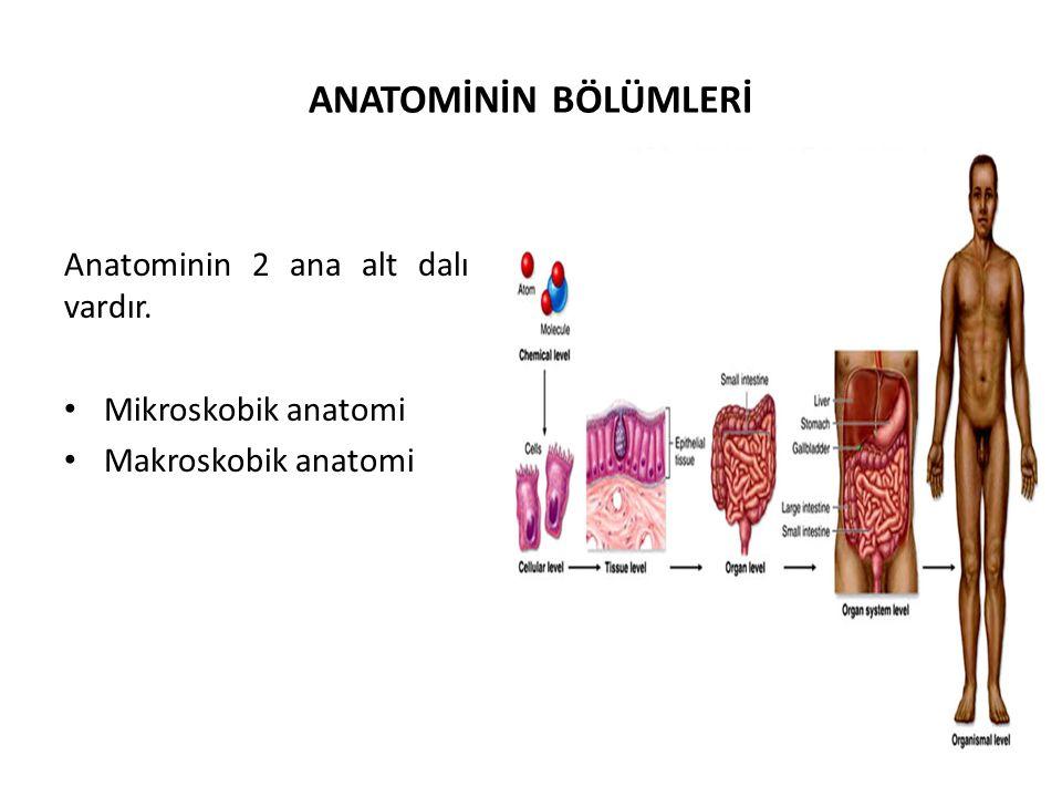 ANATOMİNİN BÖLÜMLERİ Anatominin 2 ana alt dalı vardır.