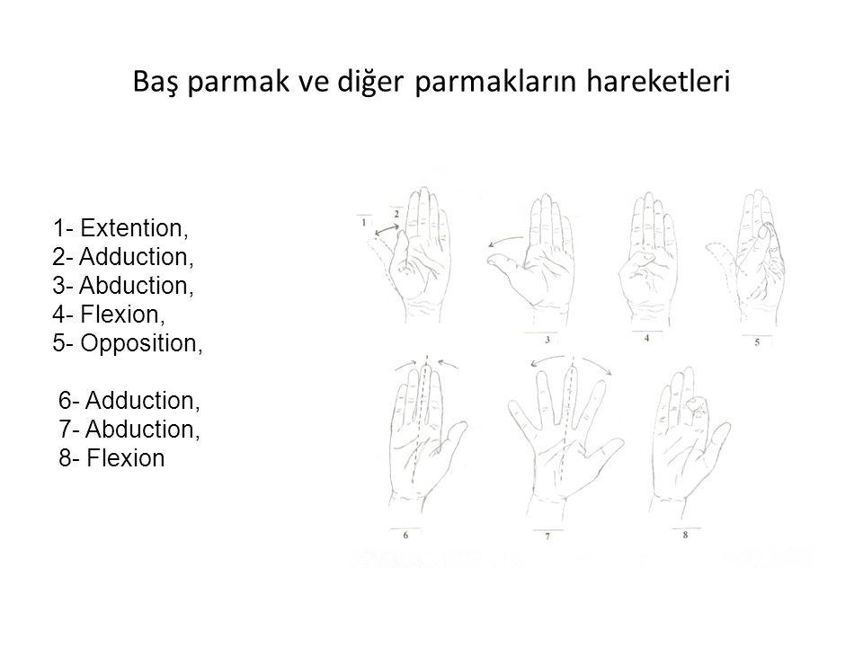 Baş parmak ve diğer parmakların hareketleri