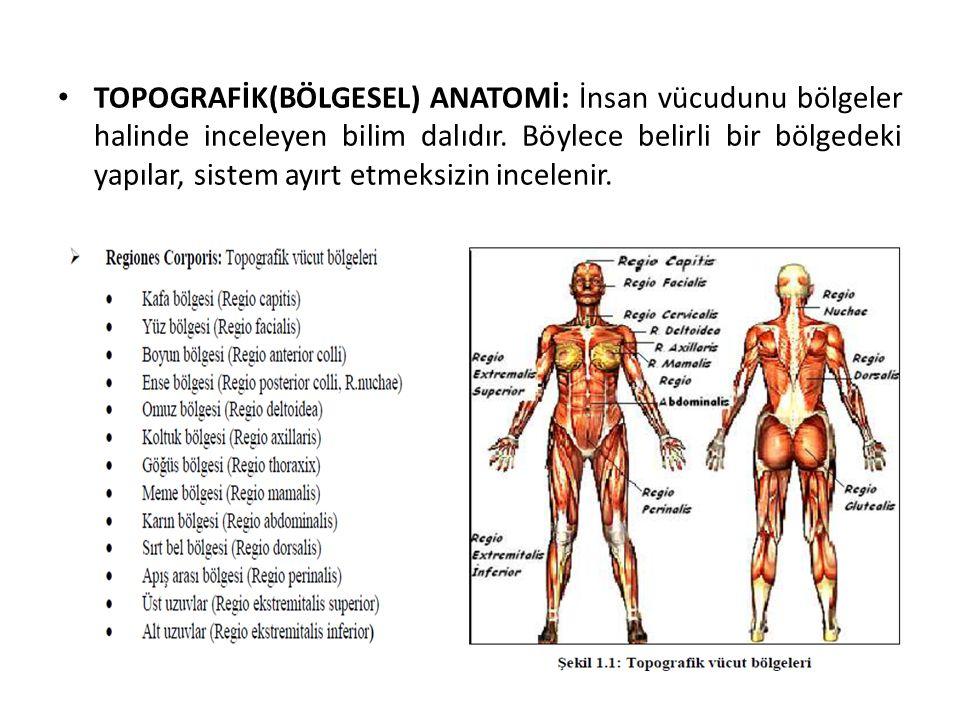 TOPOGRAFİK(BÖLGESEL) ANATOMİ: İnsan vücudunu bölgeler halinde inceleyen bilim dalıdır.