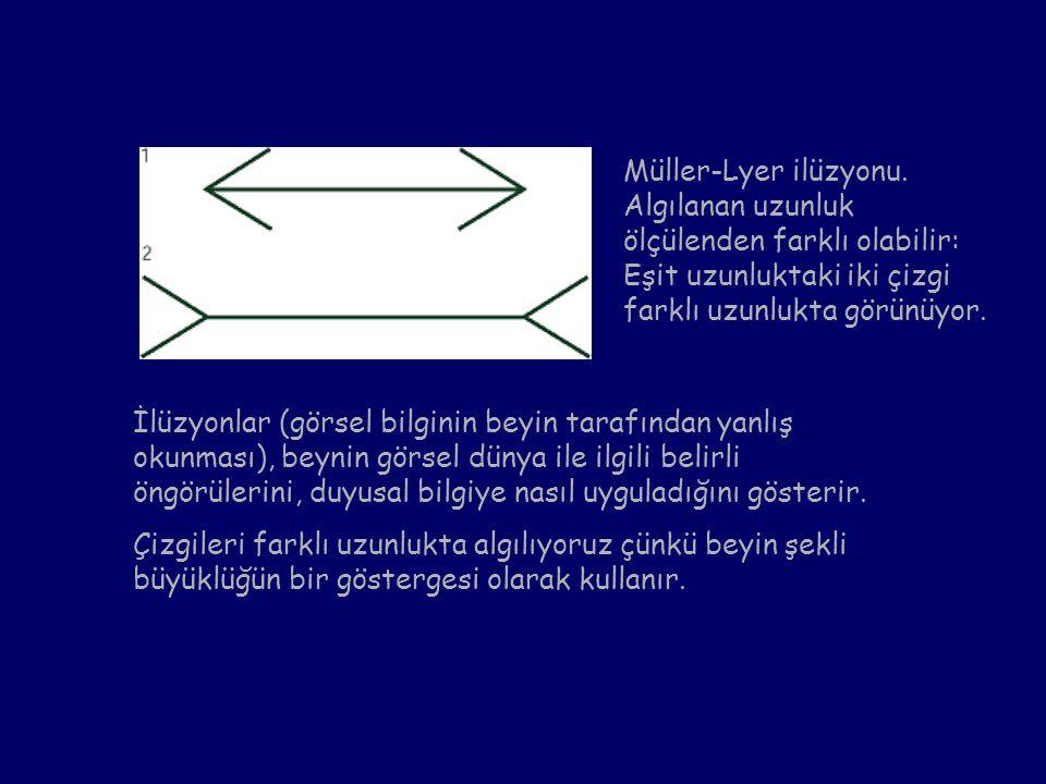 Müller-Lyer ilüzyonu. Algılanan uzunluk ölçülenden farklı olabilir:
