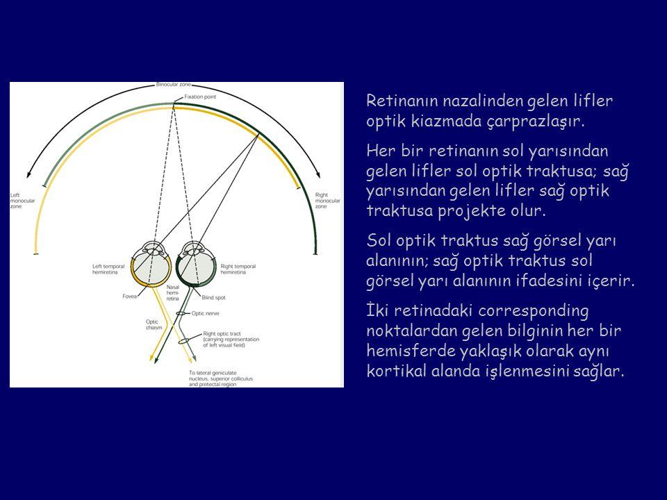 Retinanın nazalinden gelen lifler optik kiazmada çarprazlaşır.