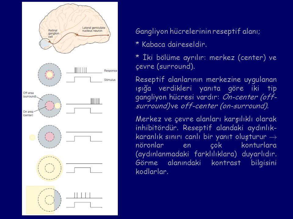 Gangliyon hücrelerinin reseptif alanı;