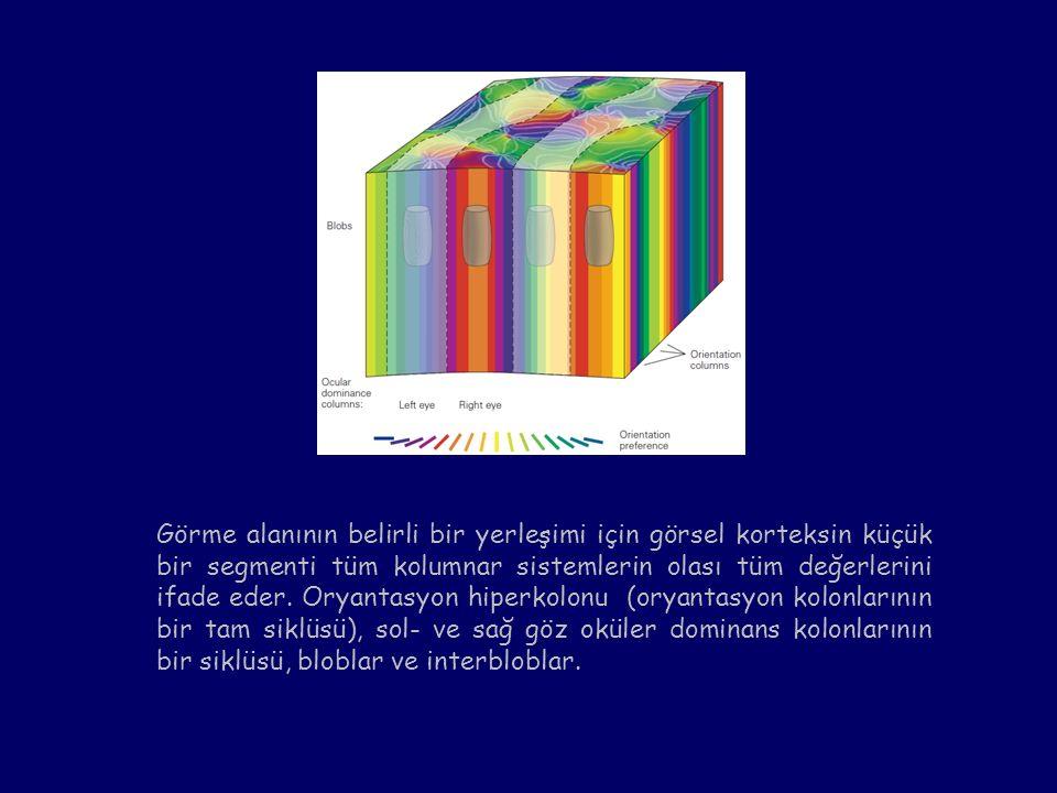 Görme alanının belirli bir yerleşimi için görsel korteksin küçük bir segmenti tüm kolumnar sistemlerin olası tüm değerlerini ifade eder.