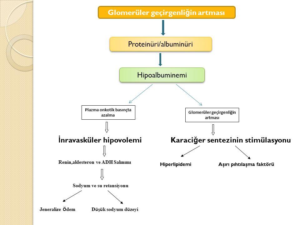 Plazma onkotik basınçta azalma Glomerüler geçirgenliğin artması
