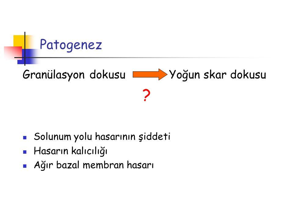 Patogenez Granülasyon dokusu Yoğun skar dokusu