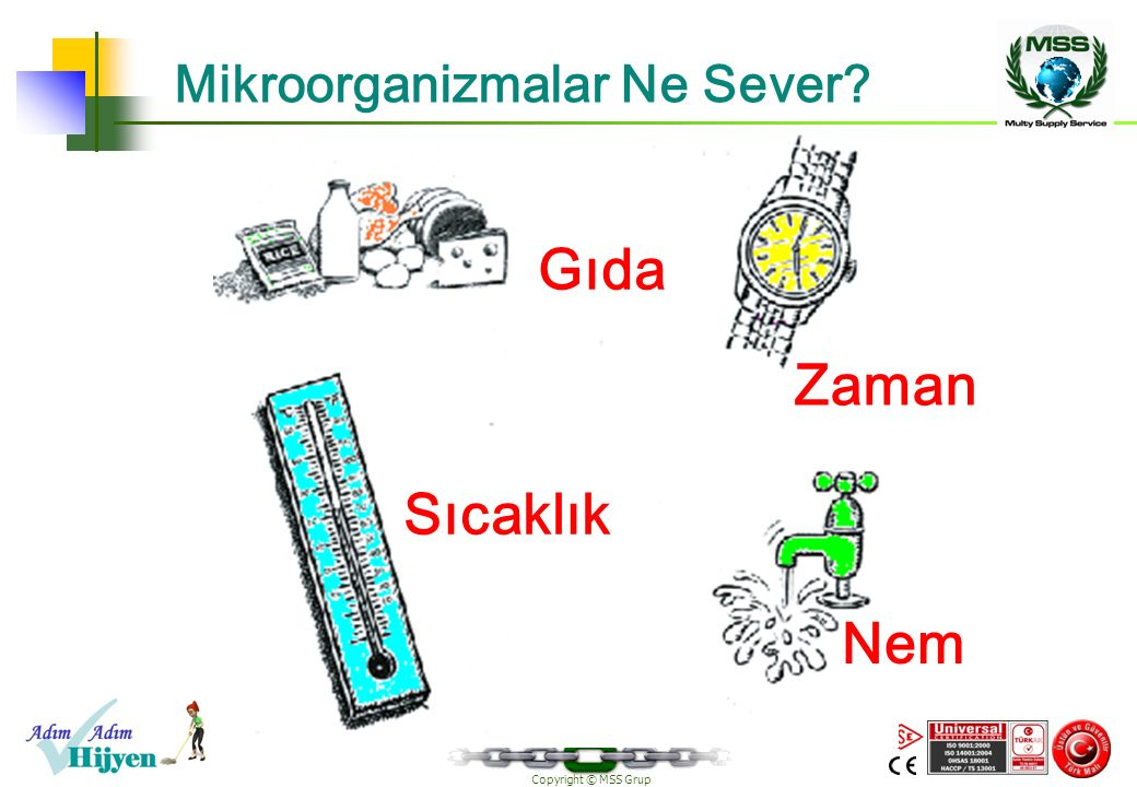 Mikroorganizmalar Ne Sever