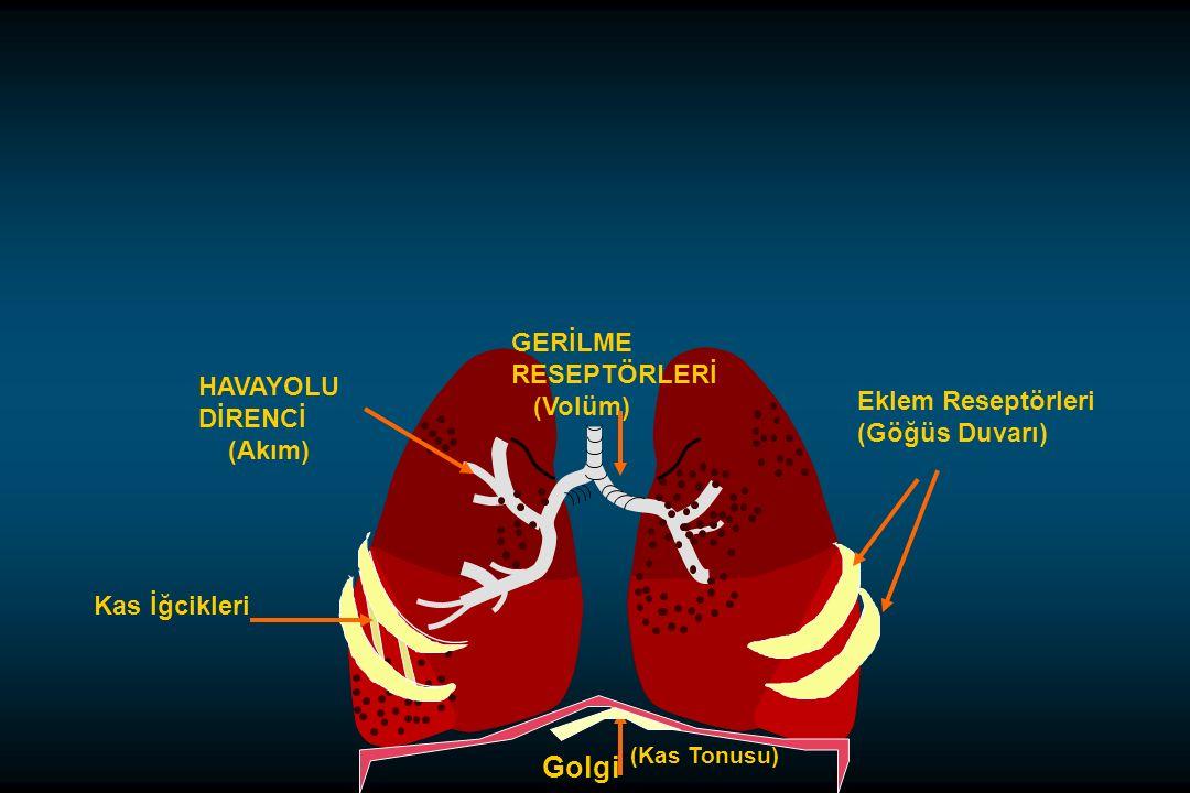 Golgi GERİLME RESEPTÖRLERİ (Volüm) HAVAYOLU DİRENCİ Eklem Reseptörleri