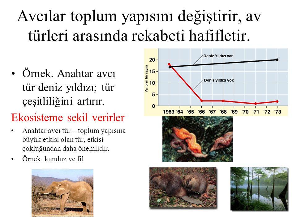 Avcılar toplum yapısını değiştirir, av türleri arasında rekabeti hafifletir.