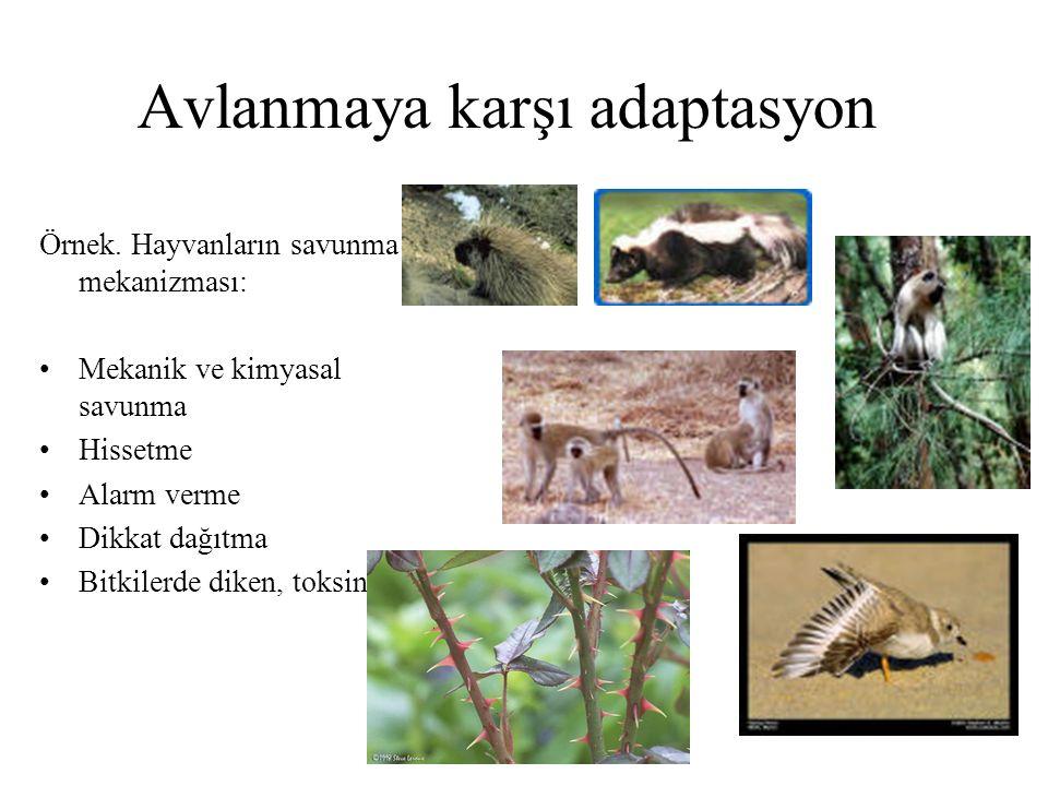Avlanmaya karşı adaptasyon