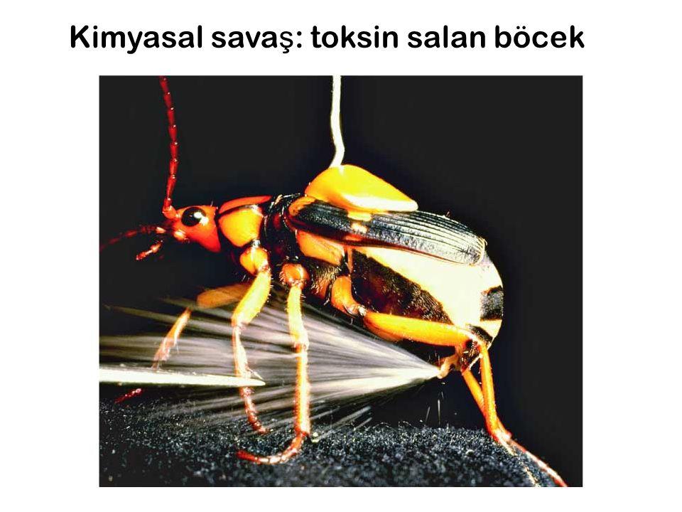 Kimyasal savaş: toksin salan böcek