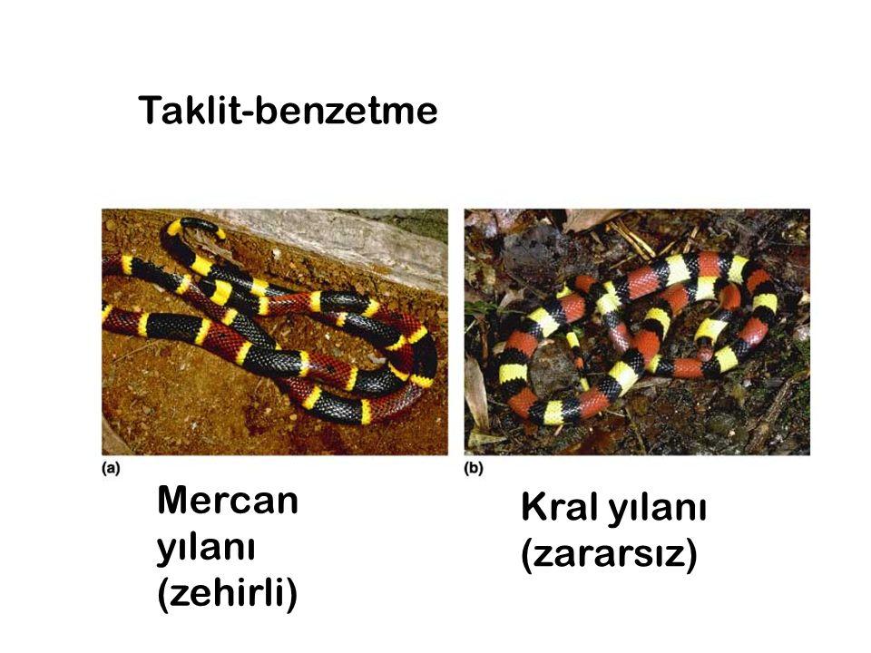 Taklit-benzetme Mercan yılanı (zehirli) Kral yılanı (zararsız)