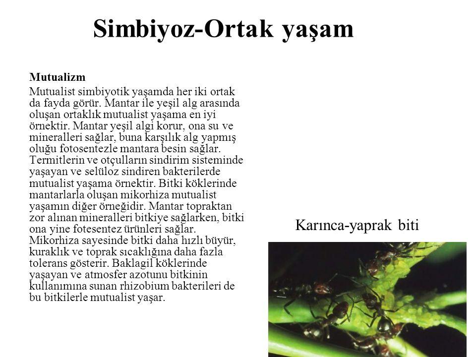 Simbiyoz-Ortak yaşam Karınca-yaprak biti Mutualizm
