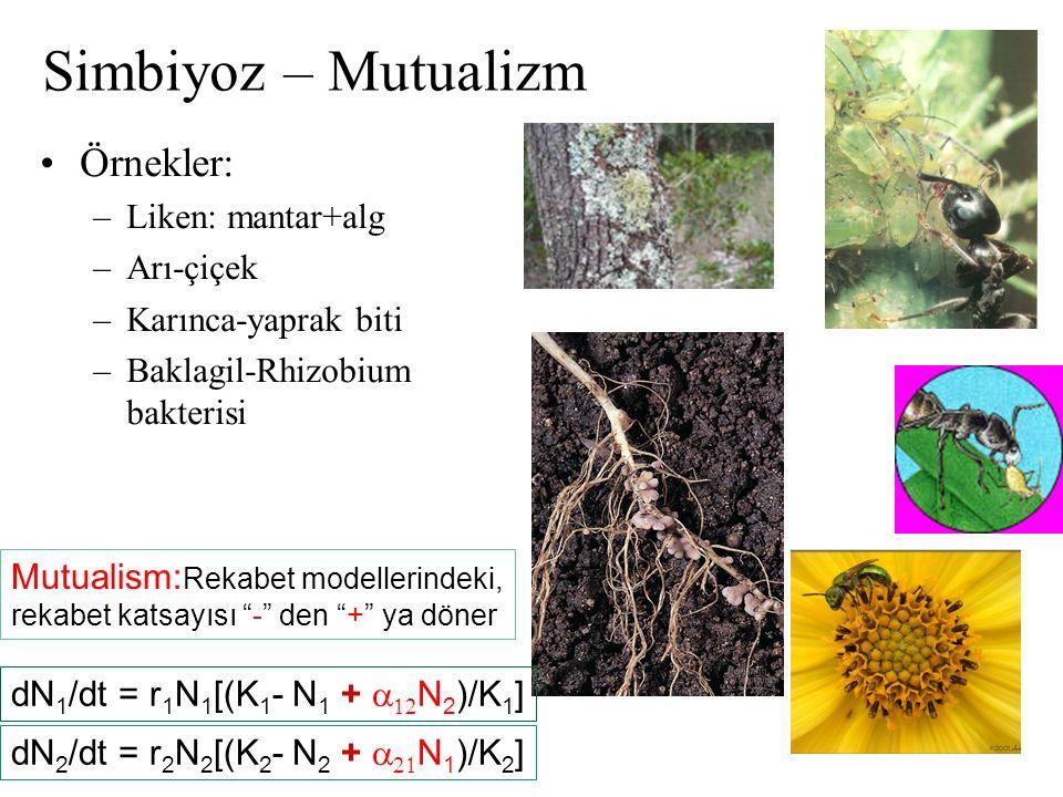 Simbiyoz – Mutualizm Örnekler: Liken: mantar+alg Arı-çiçek