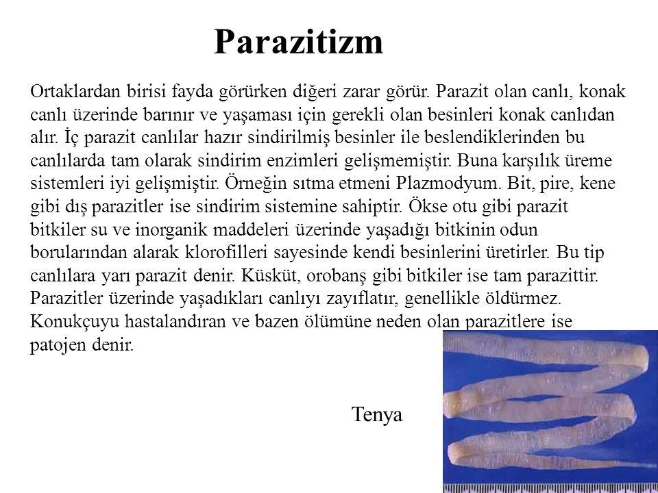 Parazitizm