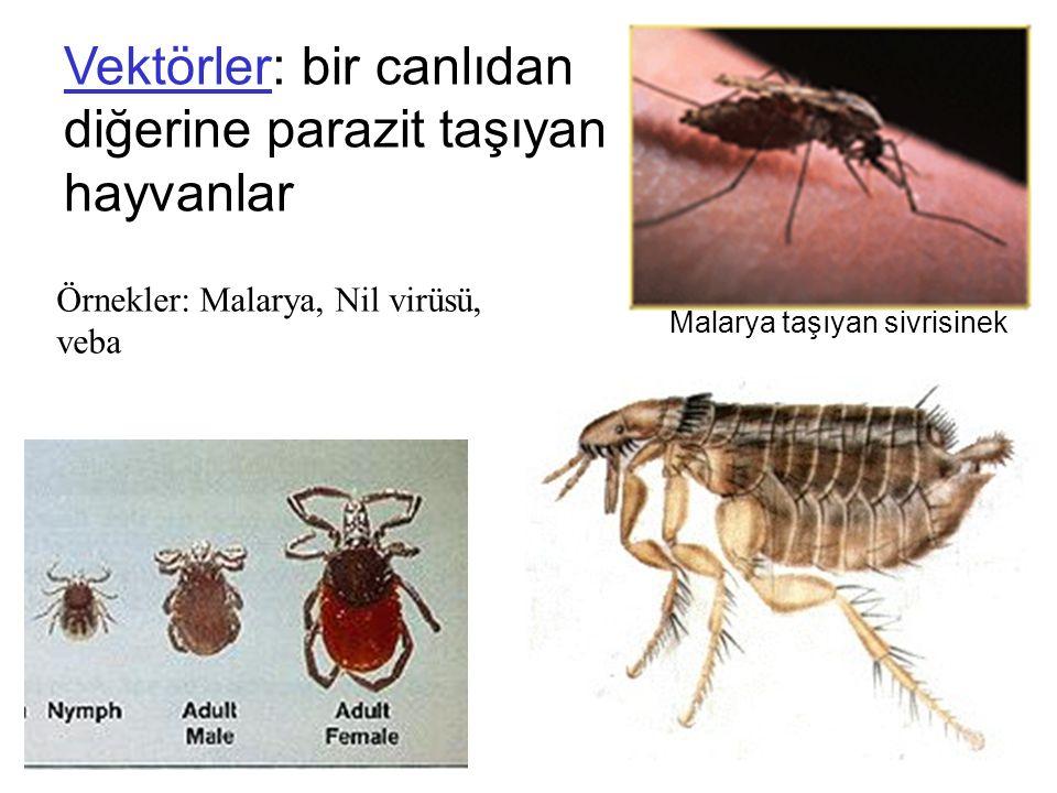 Vektörler: bir canlıdan diğerine parazit taşıyan hayvanlar