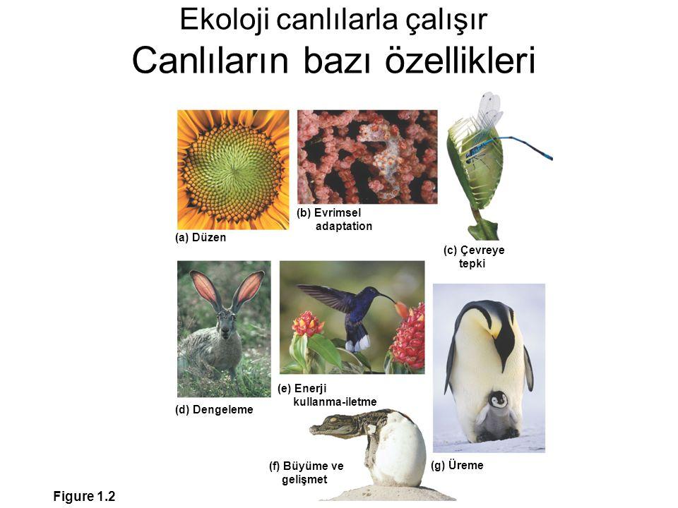 Ekoloji canlılarla çalışır Canlıların bazı özellikleri