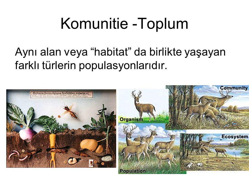 Komunitie -Toplum Aynı alan veya habitat da birlikte yaşayan farklı türlerin populasyonlarıdır.