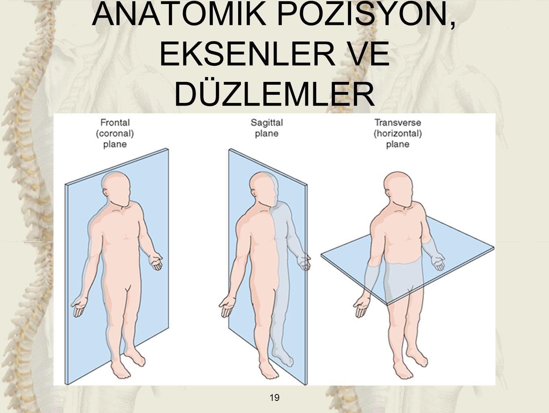 ANATOMİK POZİSYON, EKSENLER VE DÜZLEMLER