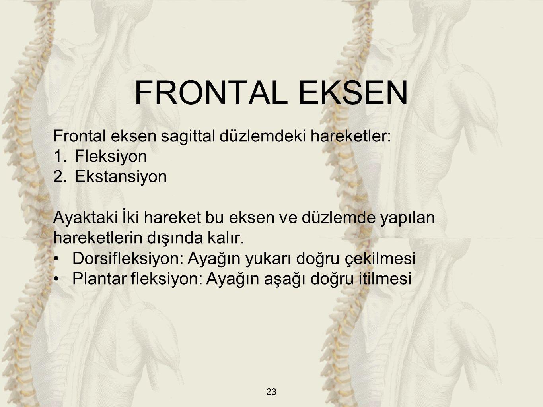 FRONTAL EKSEN Frontal eksen sagittal düzlemdeki hareketler: Fleksiyon