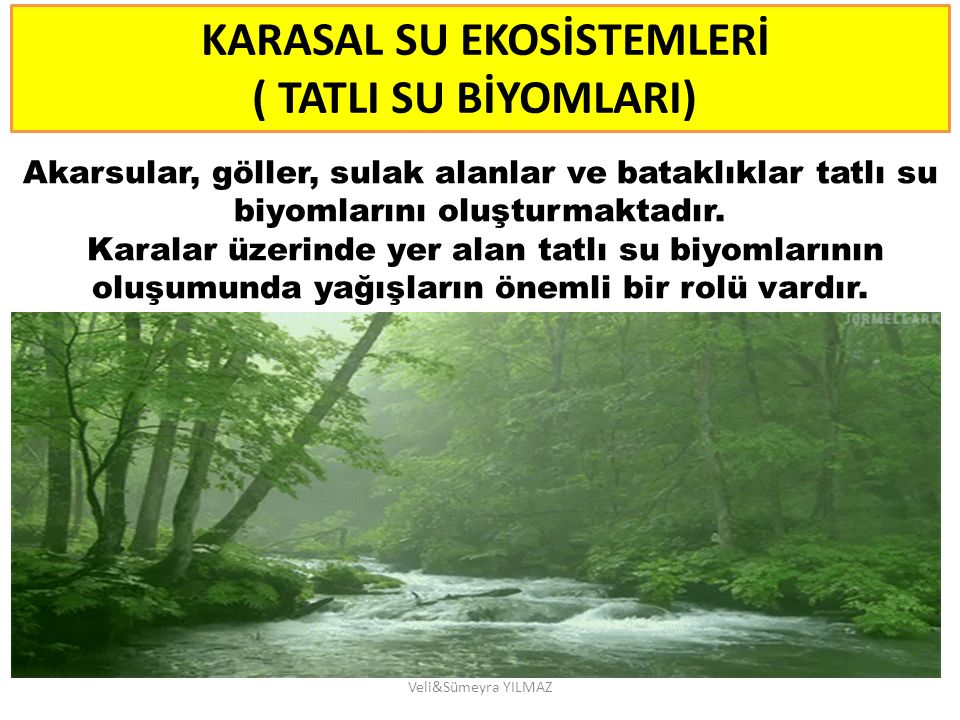 KARASAL SU EKOSİSTEMLERİ