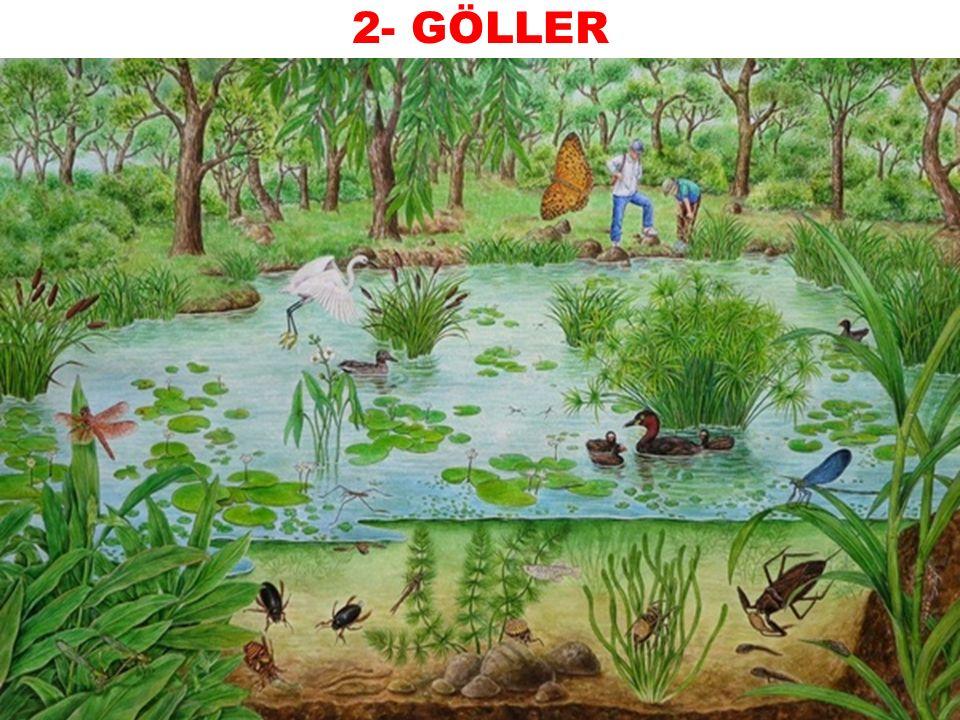 2- GÖLLER