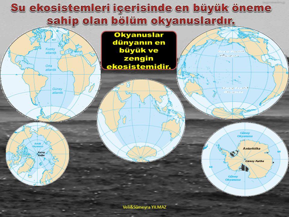 Okyanuslar dünyanın en büyük ve zengin ekosistemidir.