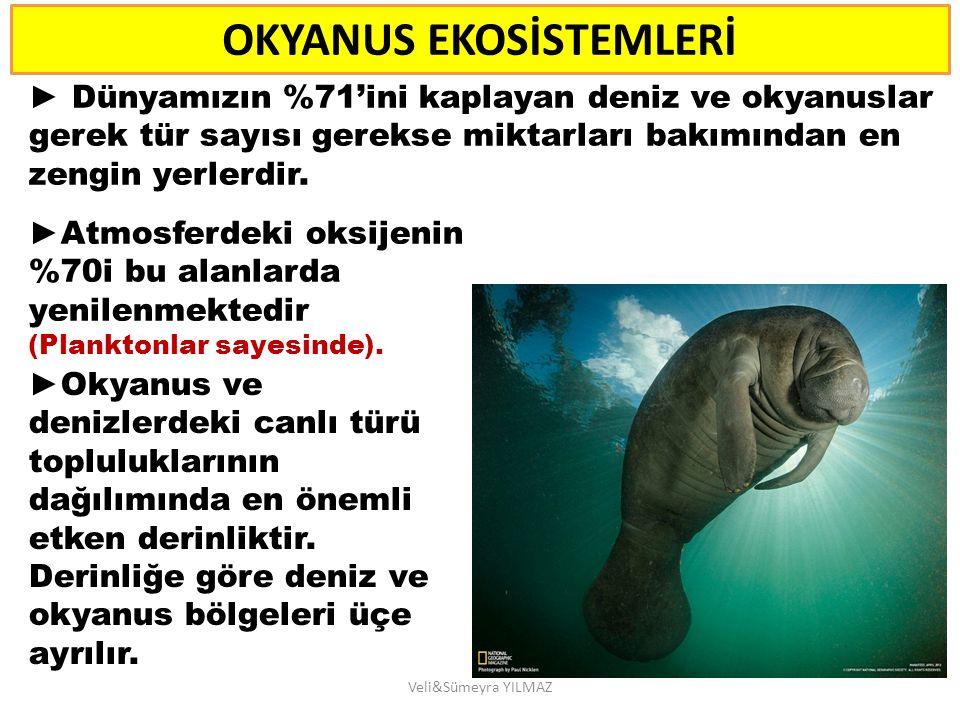 OKYANUS EKOSİSTEMLERİ