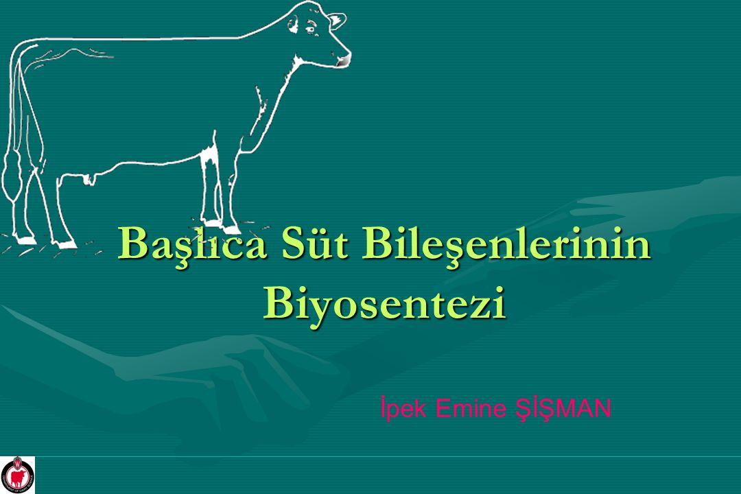 Başlıca Süt Bileşenlerinin Biyosentezi