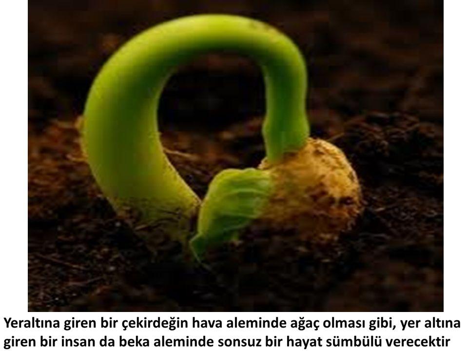 Yer altına giren bir çekirdeğin hava aleminde ağaç olması gibi, yer altına giren insan da beka aleminde sonsuz bir hayat sümbülü verecektir