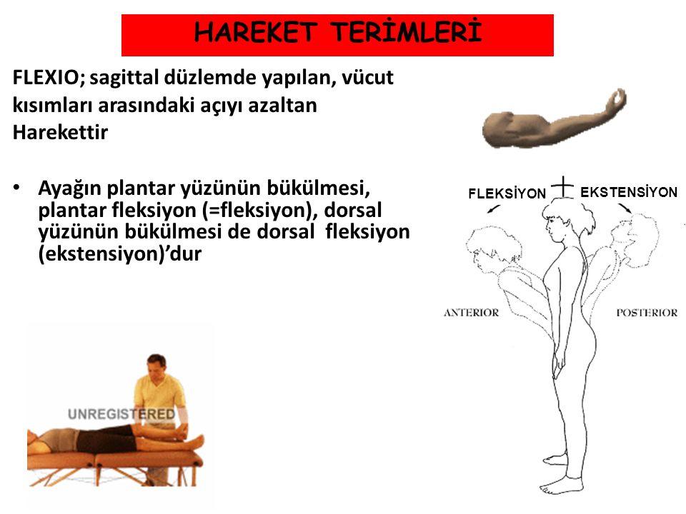HAREKET TERİMLERİ FLEXIO; sagittal düzlemde yapılan, vücut