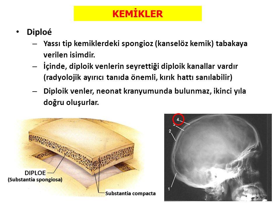 KEMİKLER Diploé. Yassı tip kemiklerdeki spongioz (kanselöz kemik) tabakaya verilen isimdir.