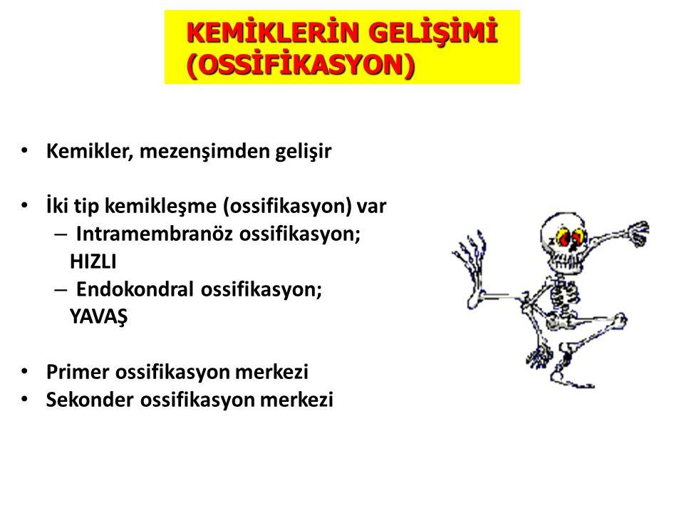 KEMİKLERİN GELİŞİMİ (OSSİFİKASYON)