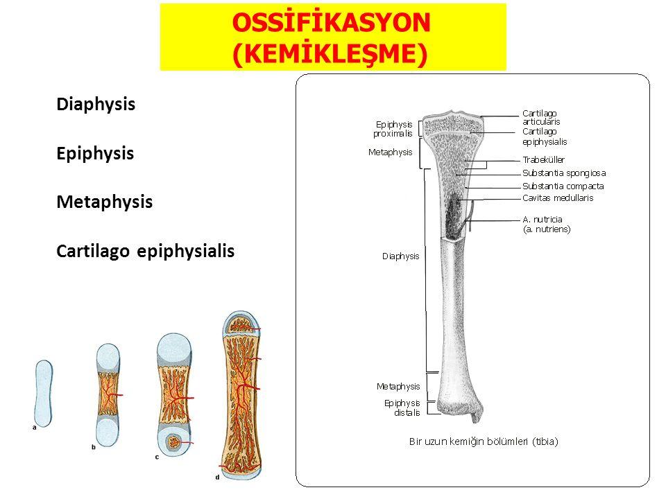 OSSİFİKASYON (KEMİKLEŞME)