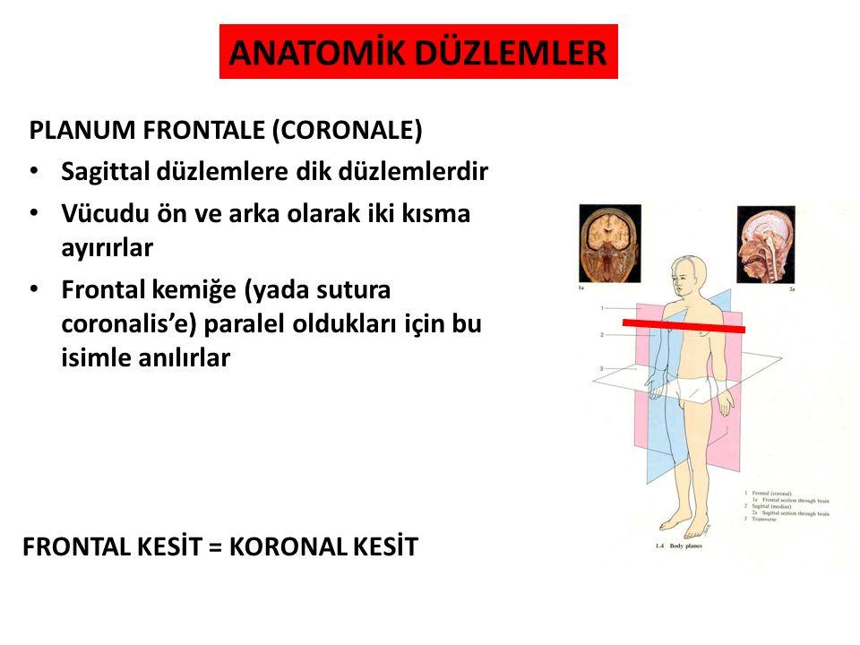 ANATOMİK DÜZLEMLER PLANUM FRONTALE (CORONALE)