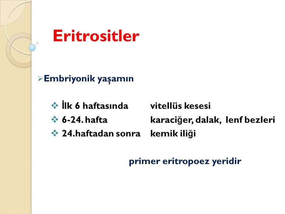 Eritrositler Embriyonik yaşamın İlk 6 haftasında vitellüs kesesi
