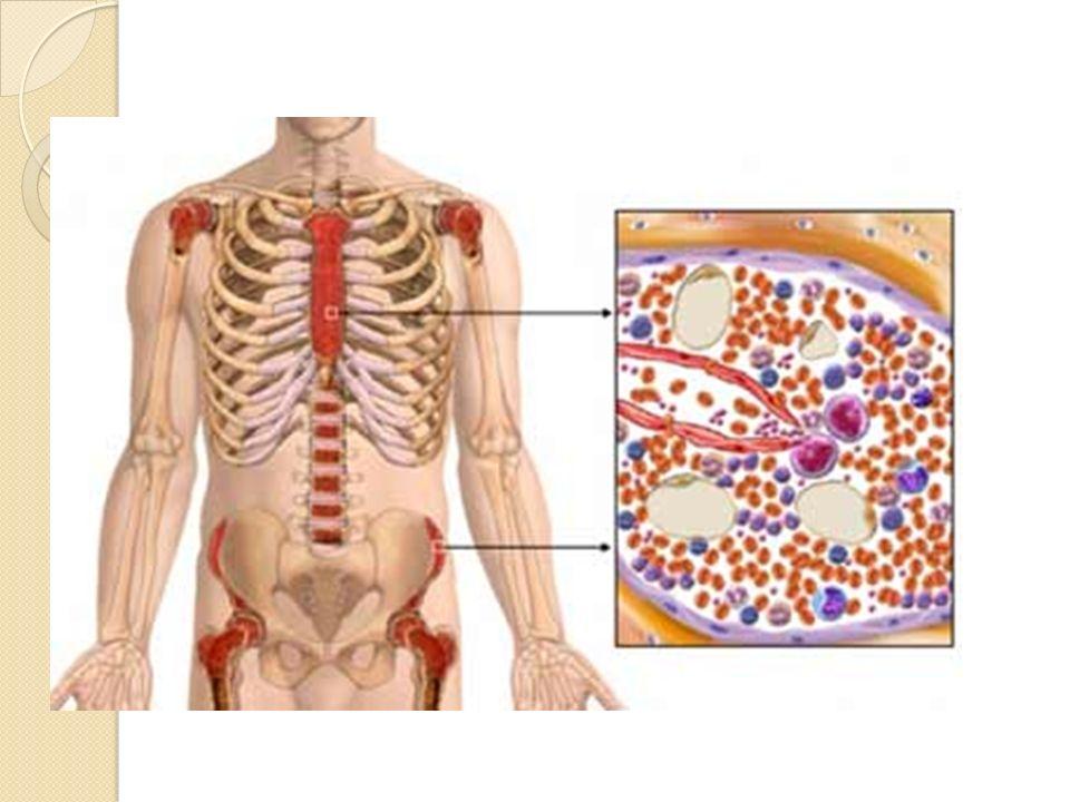 Kemik iliğinde eritropoez başlıca sternum, kostalar, vertebralar ve iliak kemiklerde olmaktadır