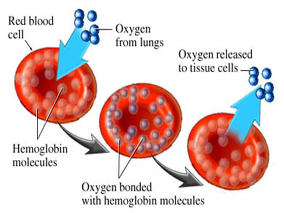 Eritrositelrdeki hemoglobin molakülleriinin yerleşmini görmekteniz