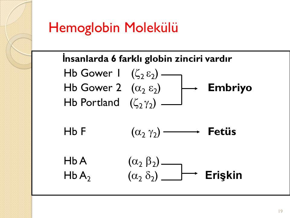 Hemoglobin Molekülü İnsanlarda 6 farklı globin zinciri vardır