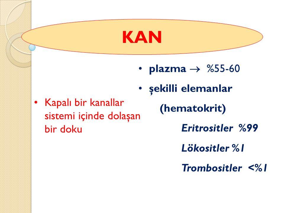 KAN plazma  %55-60 şekilli elemanlar