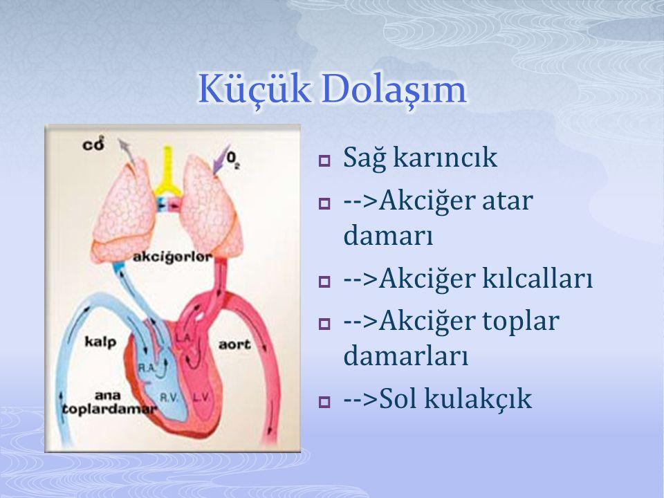 Küçük Dolaşım Sağ karıncık -->Akciğer atar damarı