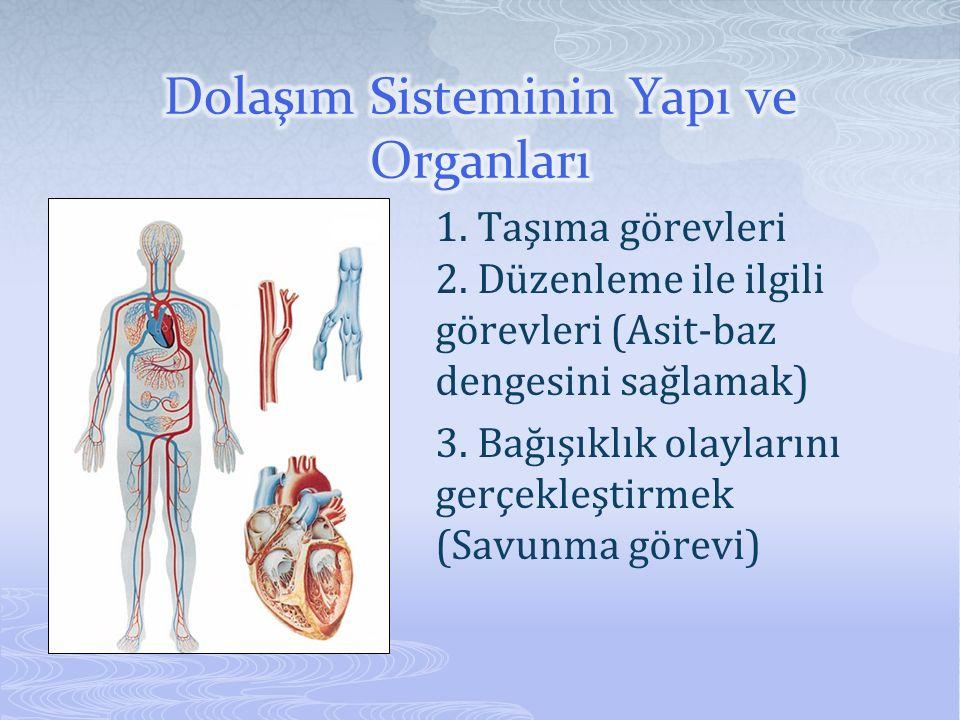 Dolaşım Sisteminin Yapı ve Organları