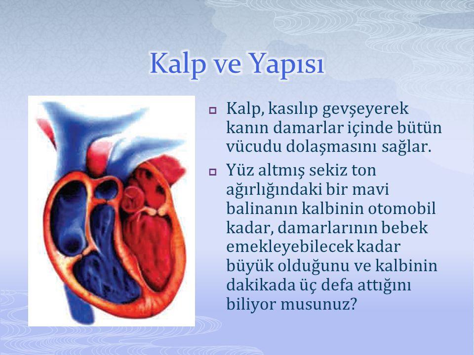 Kalp ve Yapısı Kalp, kasılıp gevşeyerek kanın damarlar içinde bütün vücudu dolaşmasını sağlar.