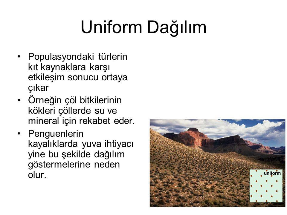 Uniform Dağılım Populasyondaki türlerin kıt kaynaklara karşı etkileşim sonucu ortaya çıkar.