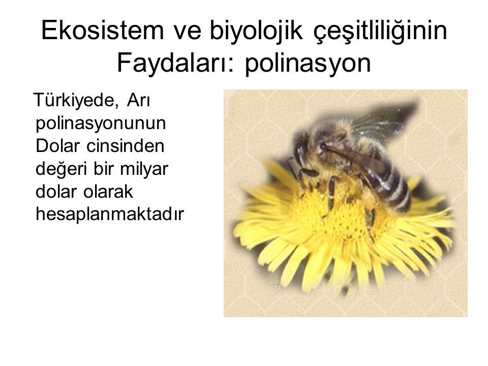 Ekosistem ve biyolojik çeşitliliğinin Faydaları: polinasyon