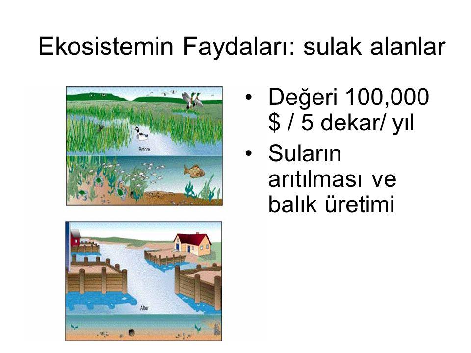 Ekosistemin Faydaları: sulak alanlar