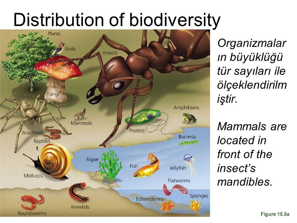 Distribution of biodiversity
