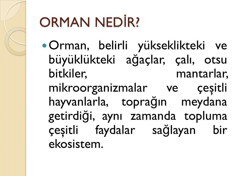 ORMAN NEDİR