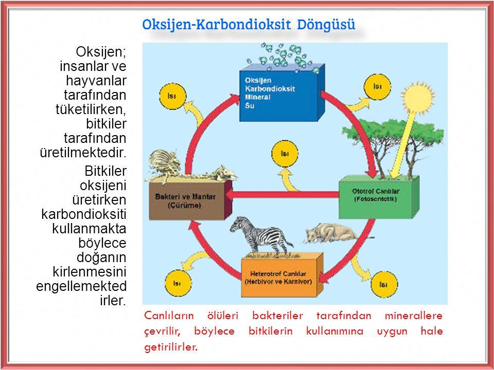 Oksijen-Karbondioksit Döngüsü