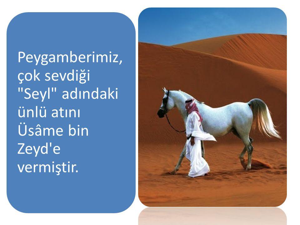 Peygamberimiz, çok sevdiği Seyl adındaki ünlü atını Üsâme bin Zeyd e vermiştir.