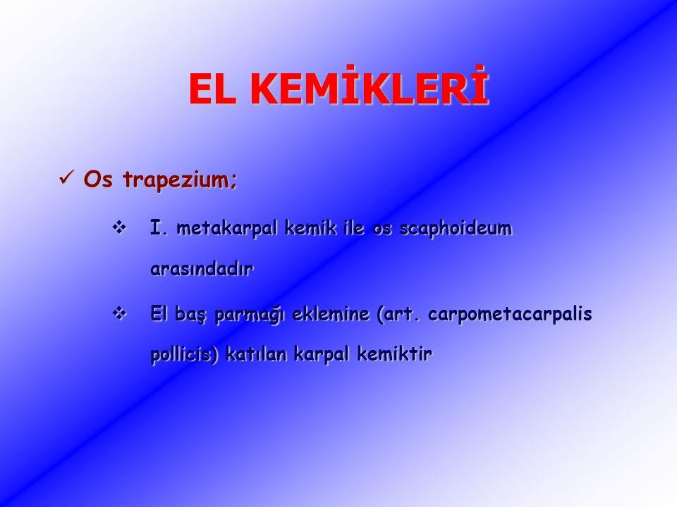 EL KEMİKLERİ Os trapezium;
